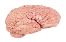 العلماء يكشفون طريقة لتجديد شباب الدماغ