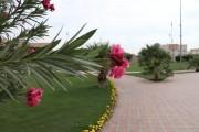 أمانة الرياض: 596 حديقة وساحة بلديّة تضمها أرجاء العاصمة