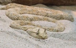كارثة أدت لاختلال التوازن البيئي في مصر وتسببت في ظهور ثعابين قاتلة