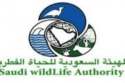 وظائف شاغرة في الهيئة السعودية للحياة الفطرية بالرياض