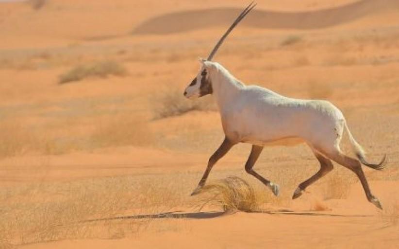 نجران.. بوابة سياحية لاستكشاف الربع الخالي