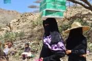 مركز الملك سلمان للإغاثة يوزع 1.942 كرتون من التمور في مديرية المقاطرة بمحافظة لحج