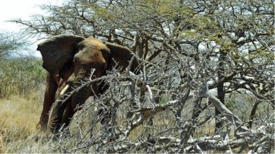 رجل حاول تنويم فيل مغناطيسيا فسحقه برجليه (فيديو)