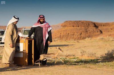 سمو ولي العهد يطلق محمية شرعان الطبيعية في محافظة العلا
