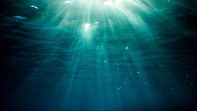العثور على مخلوق بحري نادر عمره 99 مليون عام